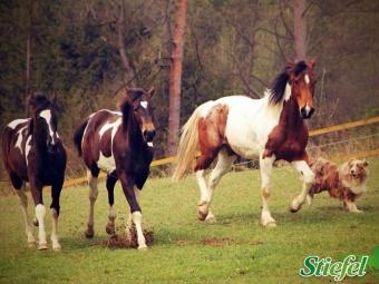 Zinek ve výživě koní