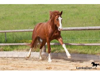 Svaly a koňské tělo